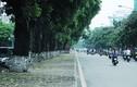 """Tiếc ngẩn ngơ nhìn hàng cây đường Kim Mã sắp bị """"trảm"""""""