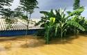 Kinh hoàng nước đê sông Bùi 2 nhấn chìm trang trại người dân