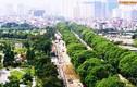 Chi phí chặt hạ hơn 1.000 cây xanh đường Phạm Văn Đồng là bao nhiêu?