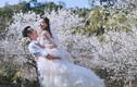 Ảnh cưới đẹp mê hồn giữa thiên đường hoa đào trắng Mộc Châu