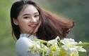 Nữ sinh gây thương nhớ với nụ cười bên hoa loa kèn