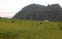 Loạt DA tiền tỷ bỏ hoang tại Phong Nha-Kẻ Bàng