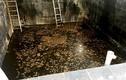 Tin mới nhất vụ 5 người chết dưới hầm nước mắm Cty Foodtech