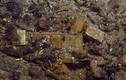 Bí ẩn những kho báu hàng tấn vàng ở Việt Nam