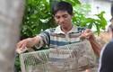 Ảnh: Theo chân thợ săn chuột hốt bạc triệu mỗi ngày