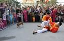 Cười bể bụng với trò bịt mắt bắt lợn ở hội làng Hà Nội