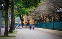 Ảnh: Những con đường có vỉa hè đẹp nhất nhì Hà Nội