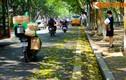 Ảnh: Lãng mạn những con đường trải đầy lá vàng ở Hà Nội