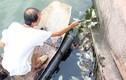 Chèo thuyền...vớt bao cao su nổi lềnh phềnh ở hồ Tây