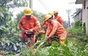 EVN HANOI với công tác đảm bảo an toàn điện mùa bão