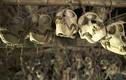 Bộ lạc bí ẩn dùng đầu lâu để trang trí nhà