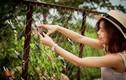 Việt Nam có hàng rào khóa tình yêu chẳng kém Hàn Quốc