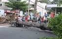 Nhiều người thoát chết khi cây cổ thụ đổ giữa phố