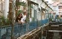 Con hẻm Hong Kong 100 tuổi thu hút giới trẻ Sài Gòn