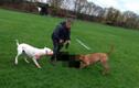 Chó đánh nhau tới chết với 2 chó dữ bảo vệ chủ