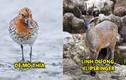 Video: 7 loài động vật kì lạ, ngộ nghĩnh và đáng yêu nhất quả đất