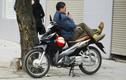 Xe ôm Hà Nội chuộng loại xe máy nào?