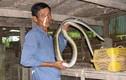 Người miền Tây lao đao khi TQ ngưng thu mua rắn?