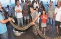 Cụ ông 73 tuổi giết con trăn khủng dài 3,9 mét