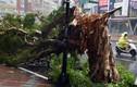 Kinh hoàng siêu bão Soudelor tàn phá Đài Loan