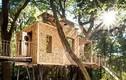 Thích thú ngôi nhà trên cây hiện đại nhất nước Anh