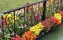 Ngây ngất 12 mẫu hàng rào quanh nhà đẹp miễn chê