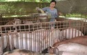 Đồng Nai giải cứu heo bằng cách xẻ thịt bán cho công nhân