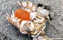 """Soi đặc sản """"tiểu huỳnh đế"""" từ biển lên bàn nhậu"""