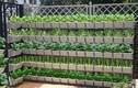 Bí kíp không thể quên để trồng vườn đứng trang trí nhà đẹp