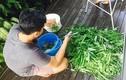 Học cách trồng rau muống lên ầm ầm của vợ chồng Lý Hải - Minh Hà