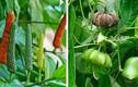 Sự thật bất ngờ về những giống cây tiền tỷ ở Việt Nam