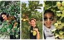 Đã mắt ngắm vườn trái cây trĩu quả trong nhà mỹ nhân Việt