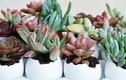 1001 cách trồng hoa đá thú vị giúp nhà đẹp như mơ