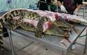 """Vì sao thịt cá sấu """"cháy hàng"""" ở Thái Lan?"""
