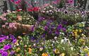 Khu vườn ngập hoa thơm, quả ngọt của mẹ Việt tại Nhật Bản
