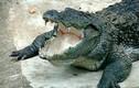 Nhà báo Tây rửa tay bị cá sấu kéo xuống ăn thịt