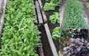 Mướt mắt ngắm những vườn rau Việt đáng ngưỡng mộ ở Séc