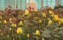 Bên trong nhà kính triệu đô trồng trăm loài hoa quý