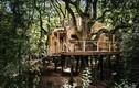 Mê mẩn ngắm ngôi nhà gỗ trên cây sang trọng ở Anh