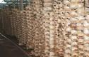 Choáng ngợp những trang trại nấm bạc tỷ của nông dân Việt