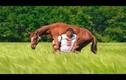 Người khỏe nhất thế giới: Vác trâu ngựa, ôtô cán không hề hấn