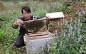 Về thủ phủ ong mật bạc hà kiếm tiền tỷ trên cao nguyên