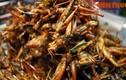Chết khiếp với thế giới ẩm thực côn trùng ở Thái Lan