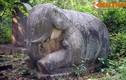 Cận cảnh cặp voi đá cổ lớn nhất Việt Nam