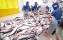 Mất cơ hội xuất khẩu 100 tấn mỡ cá chỉ vì... thủ tục