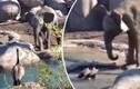 Trận chiến kỳ lạ đầy kịch tính giữa ngỗng và... voi