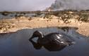 Tận mục thảm họa môi trường trong chiến tranh vùng Vịnh 1991