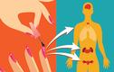Mê làm nail dễ rối loạn nội tiết và chức năng sinh sản