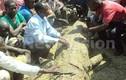 Giết cá sấu nặng 1 tấn trả thù cho vợ yêu