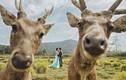 Chiêm ngưỡng những bức ảnh cưới hài hước khó đỡ